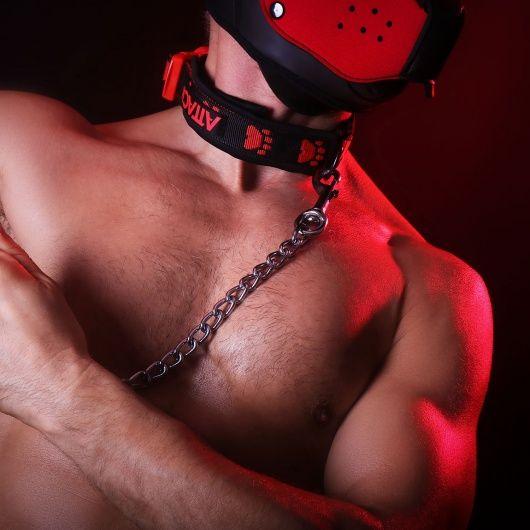 Puppy und dog training, Hundehalsbänder