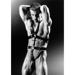 MASTER HARNESS LEATHER 35 MM